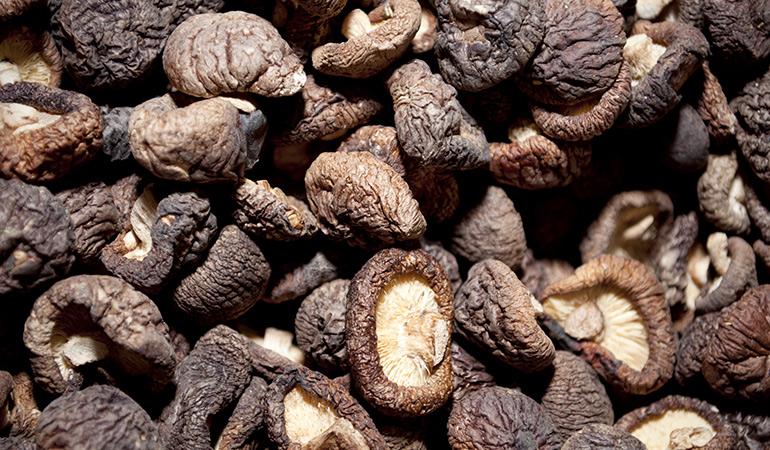 Medicinal Mushrooms Heal Several Abnormalities
