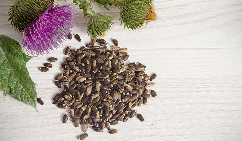 Milk thistle is said to help produce more milk