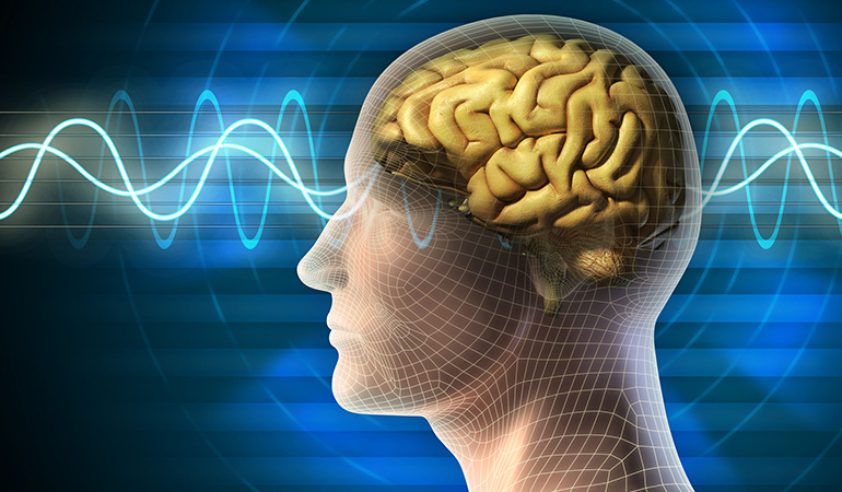 A healthy gut enhances brain function.