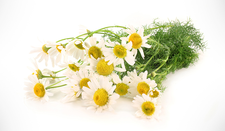 Thanks to chamomile's anti-inflammatory properties, its tea works wonders for soothing rashes and acne
