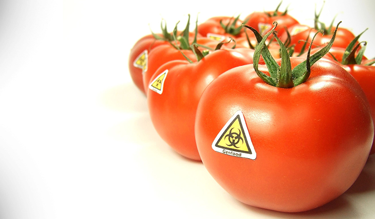 effects of gm foods on health