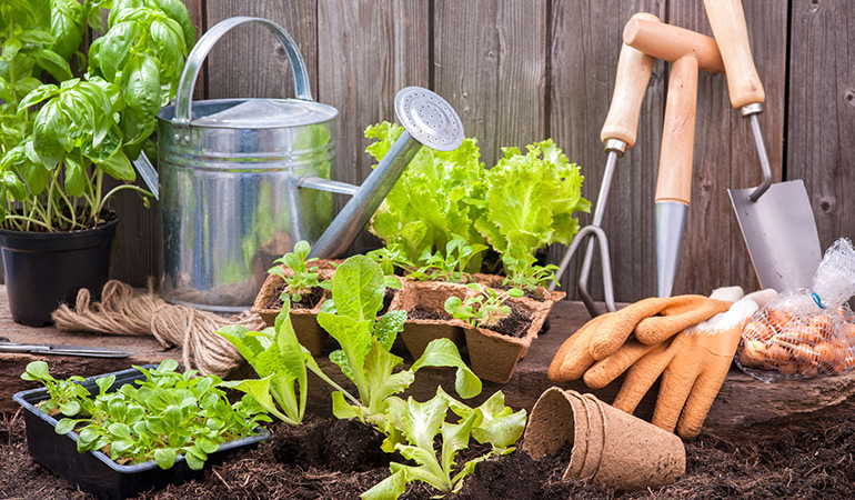 Grow some veggies and spices in your backyard or on your balcony.