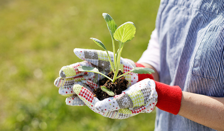 Growing your own herbs reduces and recycles waste and benefits the environment.
