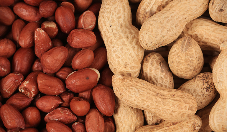 Peanuts are not nuts but belong to the category of legumes