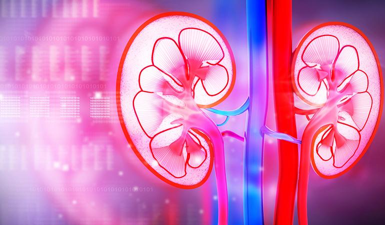 Protects Kidney Heath