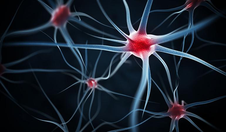 B vitamins protect neurons
