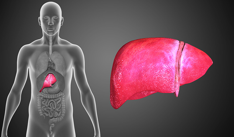 Your liver can regrow to its original size after a surgery.