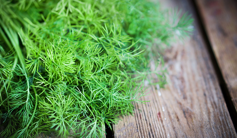 Dill has antioxidant and antiviral properties that help prevent plaque and gum problems