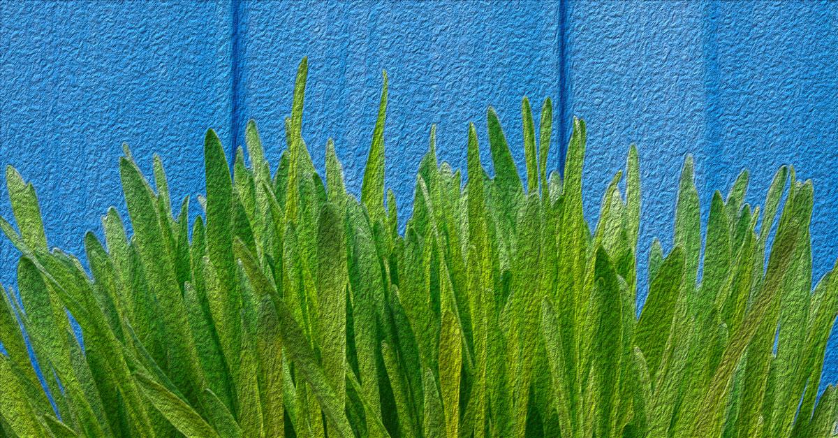 Health benefits of barley grass.