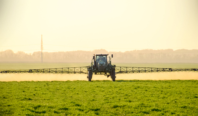 Wheat crops are sprayed with glyphosate 7–10 days before harvesting to provide faster and more even yield
