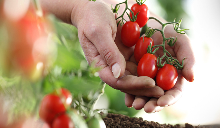 you can save money by growing certain produce at home