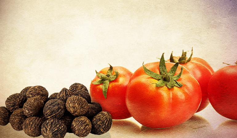 The root of the black walnut trees emit a chemical called juglone, which is toxic to tomatoes